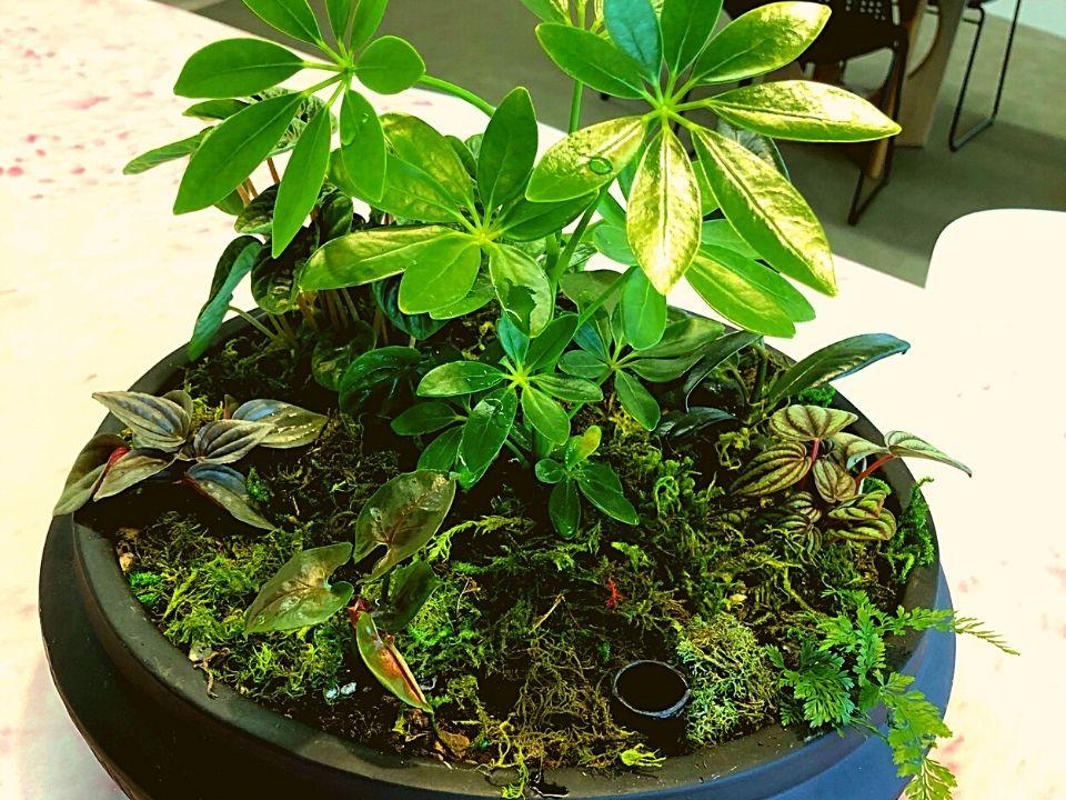 Indoor Plant Hire Mixed Bowl