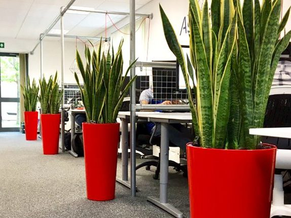 office plant hire sydney