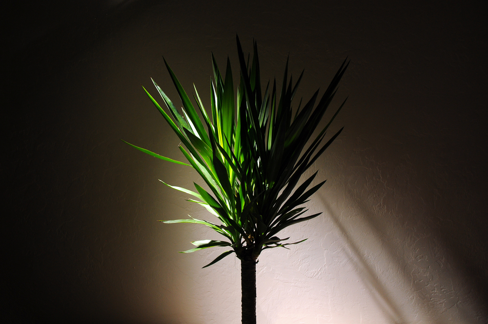 indoor plants for low light in darkness