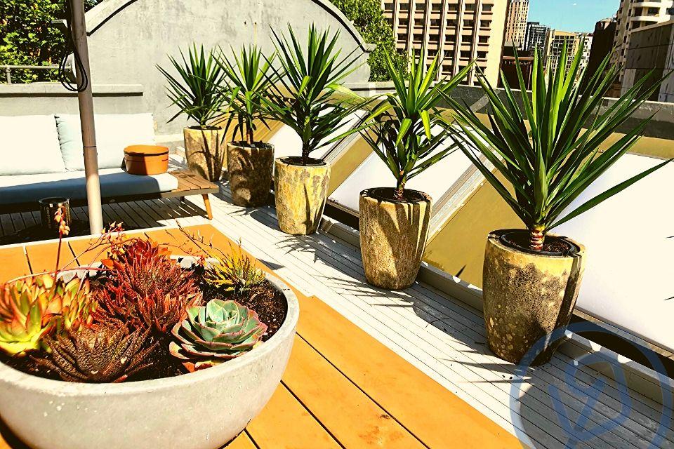 Indoor Plant Hire Succulent Bowl