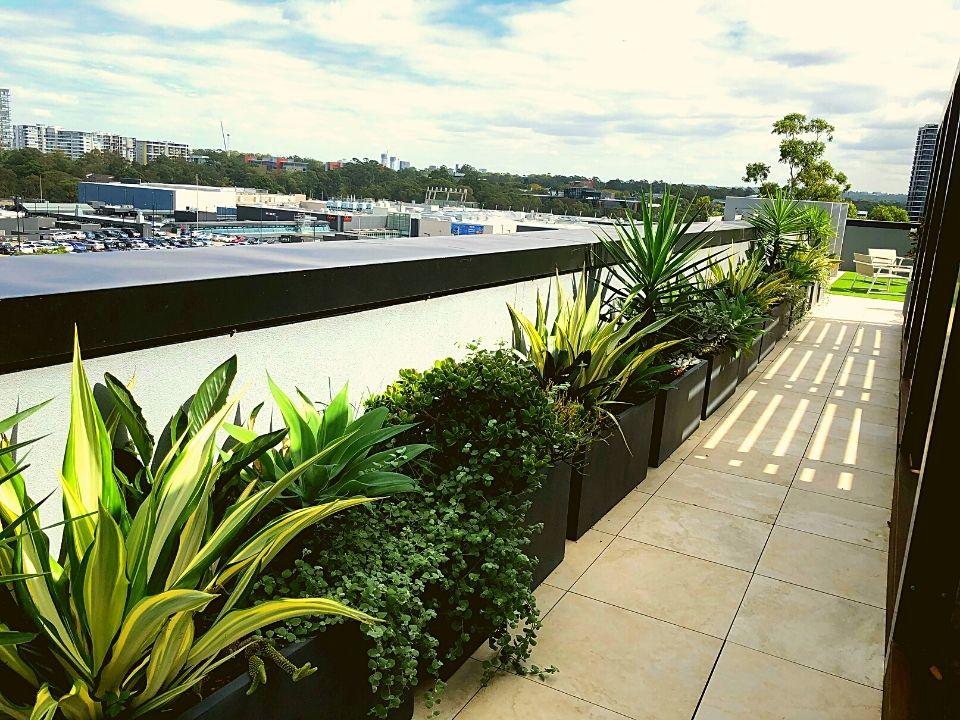 Rooftop Garden Indoor Plant Hire Trough