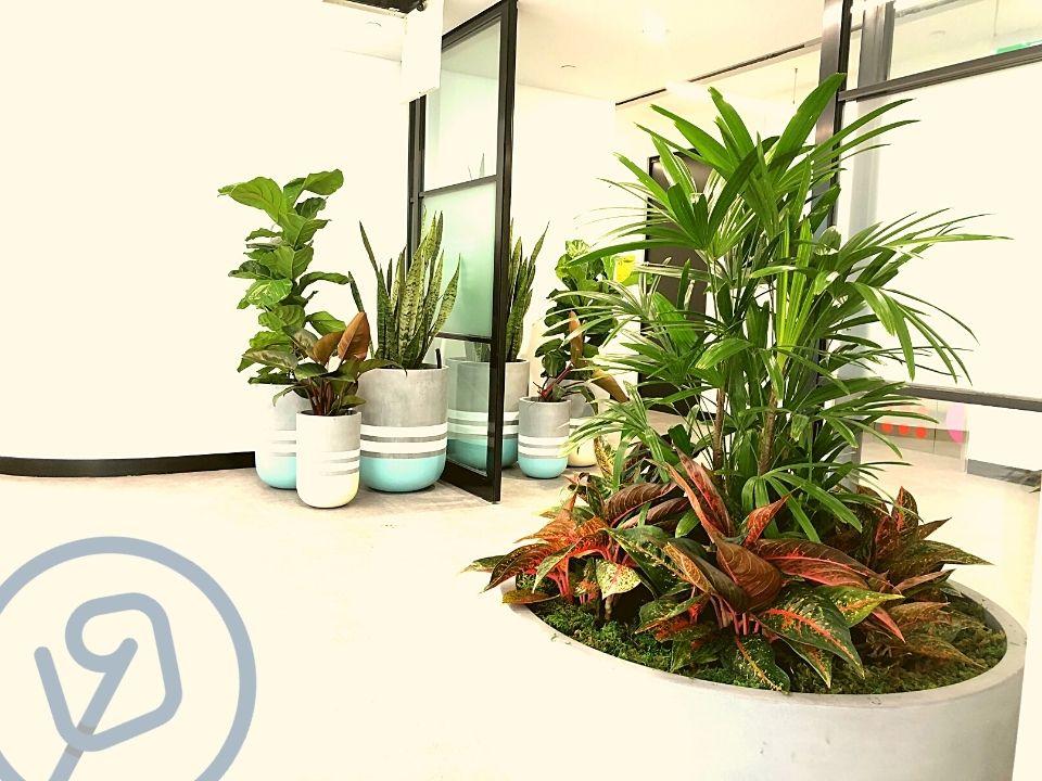 Indoor Plant Hire Feature Pot
