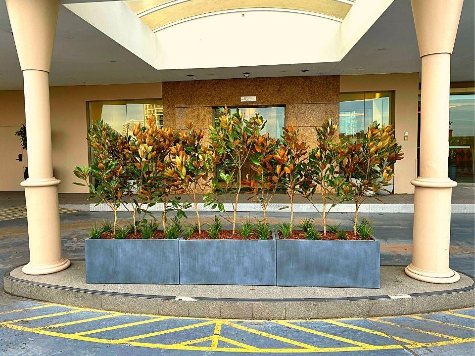 Indoor Plant Hire Outdoor Troughs Garden