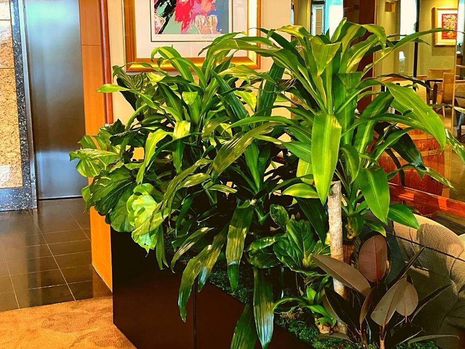 Indoor Plant Hire Trough Mixed Garden
