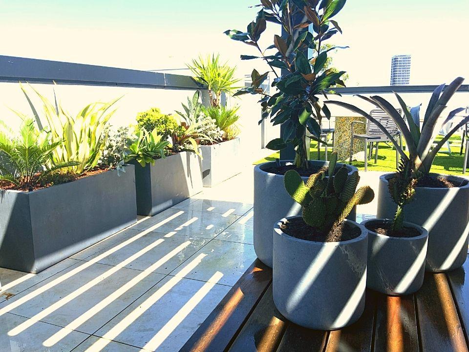 Rooftop Garden Indoor Plant Hire Trough Pots
