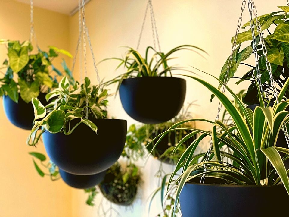 Indoor Plant Hire Hanging Pots Garden