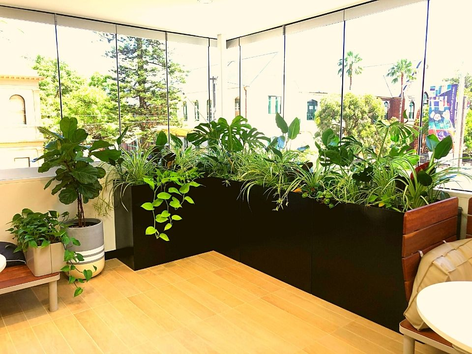Indoor Plant Hire Custom Joinery