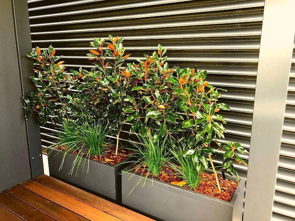 Rooftop Garden Indoor Plant Hire Trough Magnolia