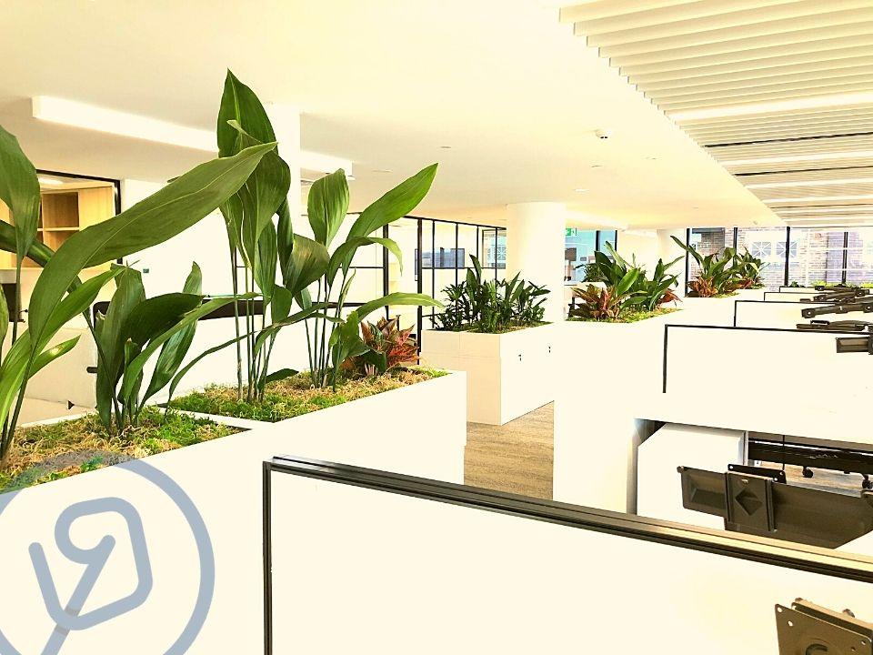 Indoor Plant Hire Planter Box Trough Tambour
