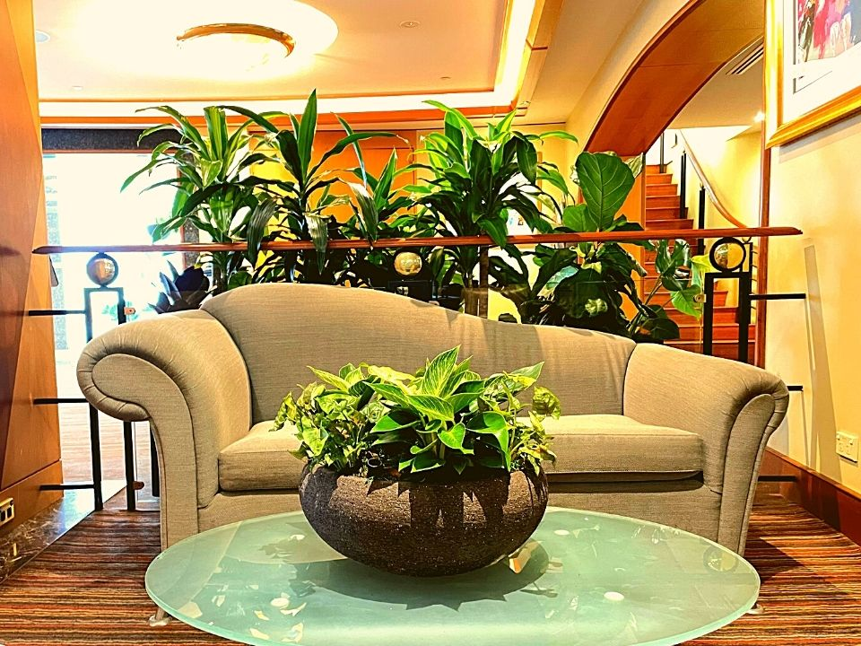 Indoor Plant Hire Feature Bowl
