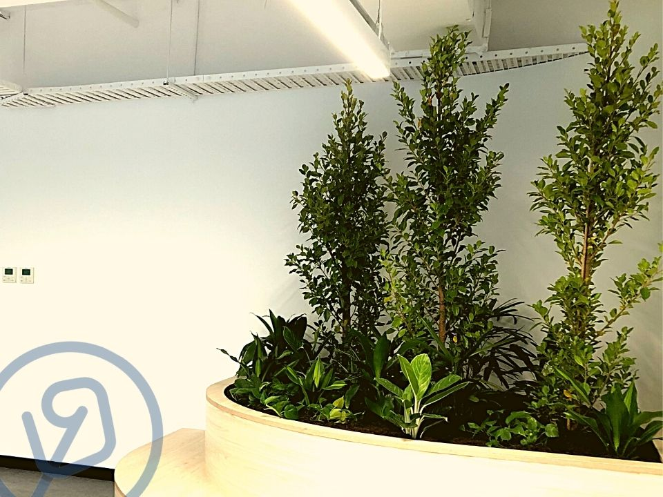 Indoor Plant Hire Tree Custom Joinery