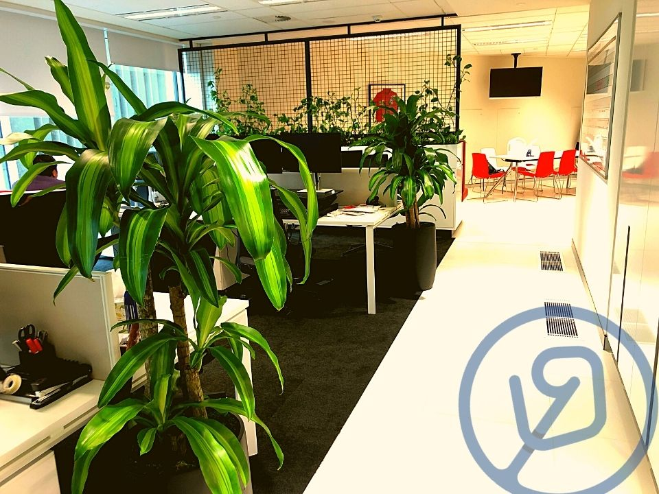 Indoor Plant Hire Custom Joinery Cage Climbing Pothos and Floor Plant