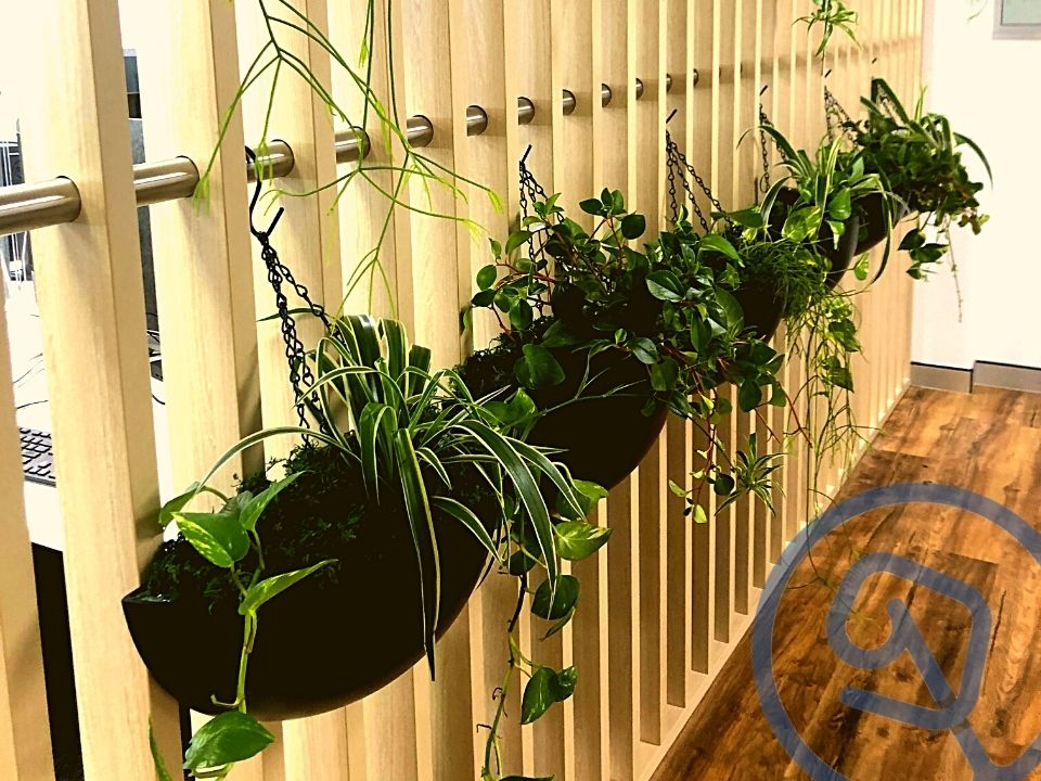 Indoor Plant Hire Hanging Garden