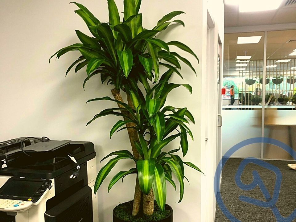 Indoor Plant Hire Happy Plant