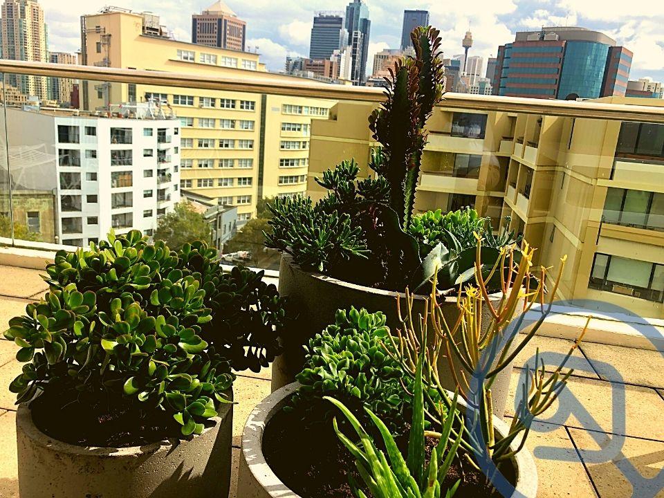 Indoor Plant Hire Succulent Outdoor Cluster