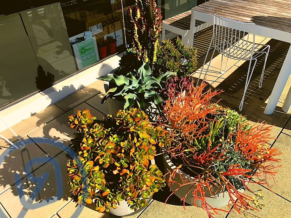 Indoor Plant Hire Succulent Pots Outdoors